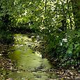 Stream Into The Lake