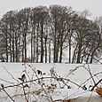 Cherington_winter_1