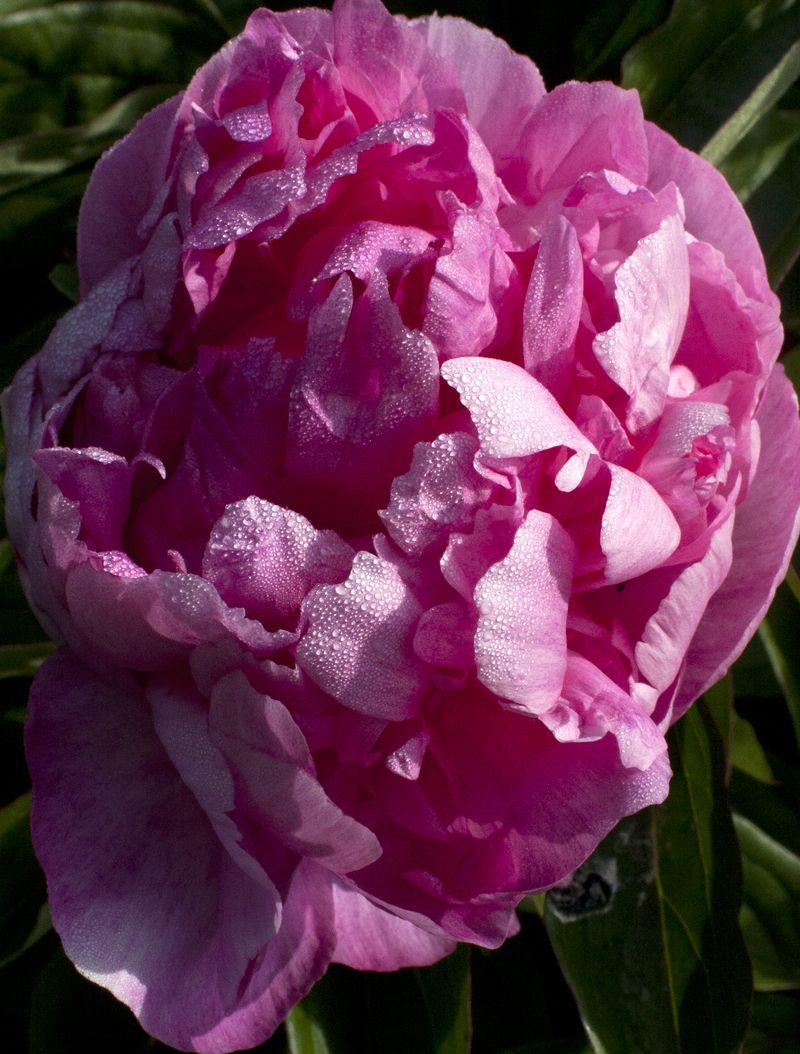 Flower IMG_9183
